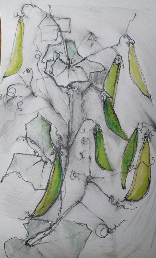 Peas. RHS Harlow Carr