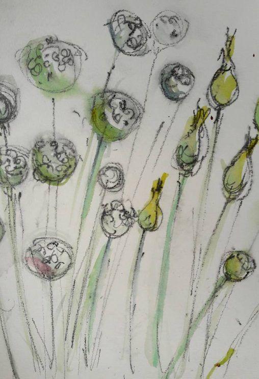 Seedheads in the veggie garden, RHS Harlow Carr