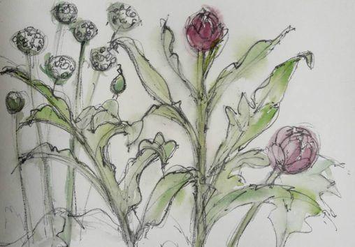 Allium and globe artichoke, RHS Harlow Carr