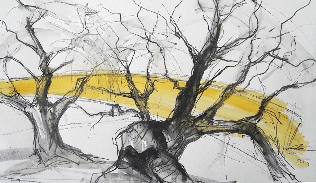 Tree and oilseed rape Barton le Willows