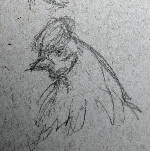 Chicken head study at Stillingfleet Lodge Gardens