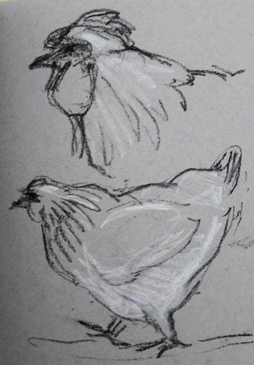 Chicken with attitude at Stillingfleet Lodge Gardens