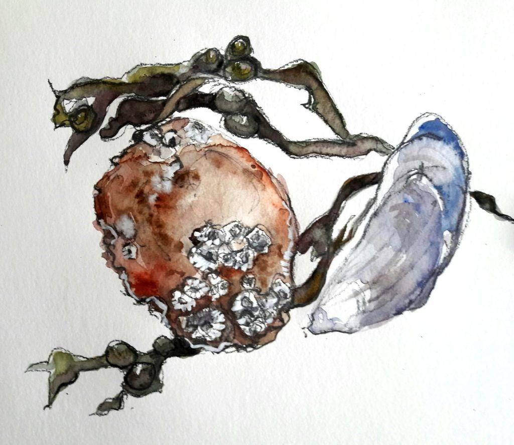 Crab shell, mussel and seaweed study