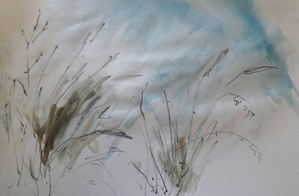 Dune grasses. Water soluble graphite and watercolour on paper