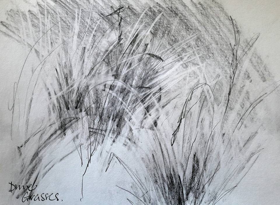 Dune grasses. Graphite on paper