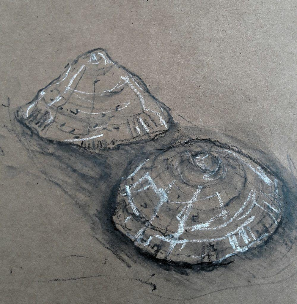 Limpet study
