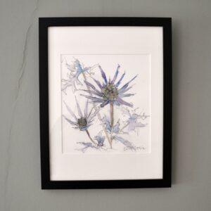 Blue Eryngiums
