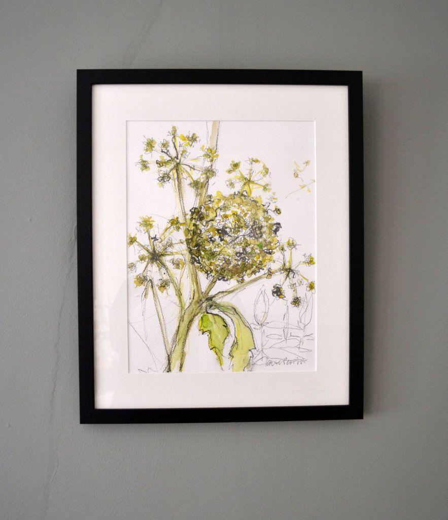 Ornamental Hogweed. Original graphite and watercolour on acid-free Bockingford paper