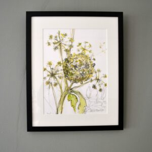 Ornamental Hogweed