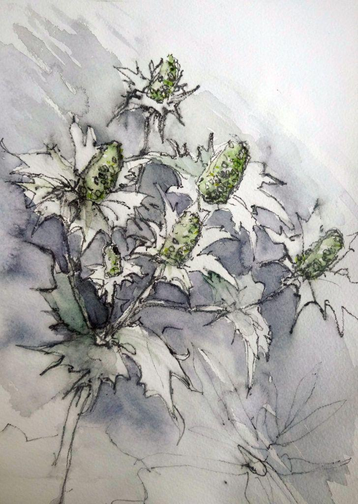 White eryngiums. Colour study