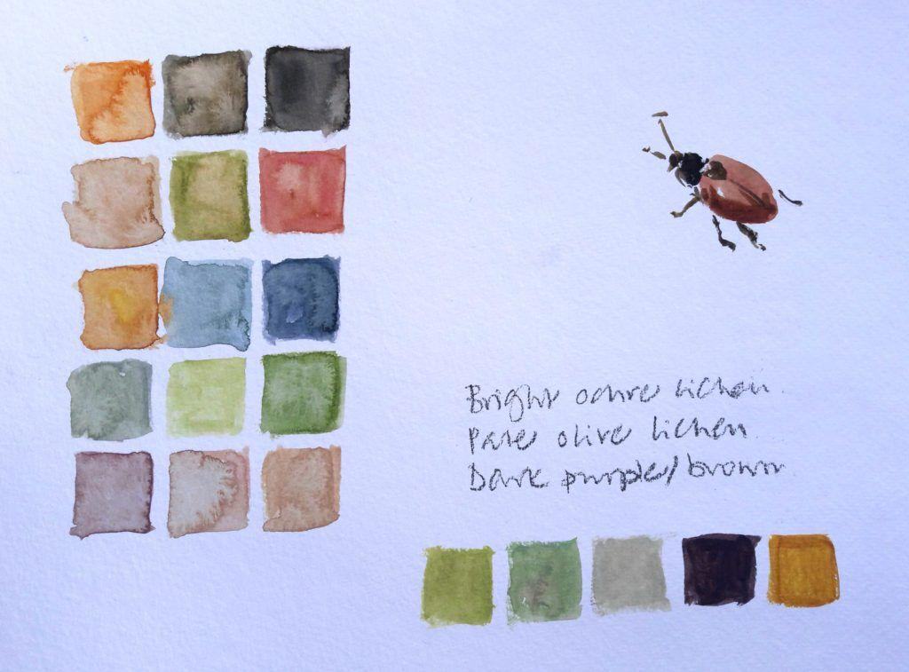 Ynys Giftan colours on a bright sunny day (and a beetle that adopted me!)