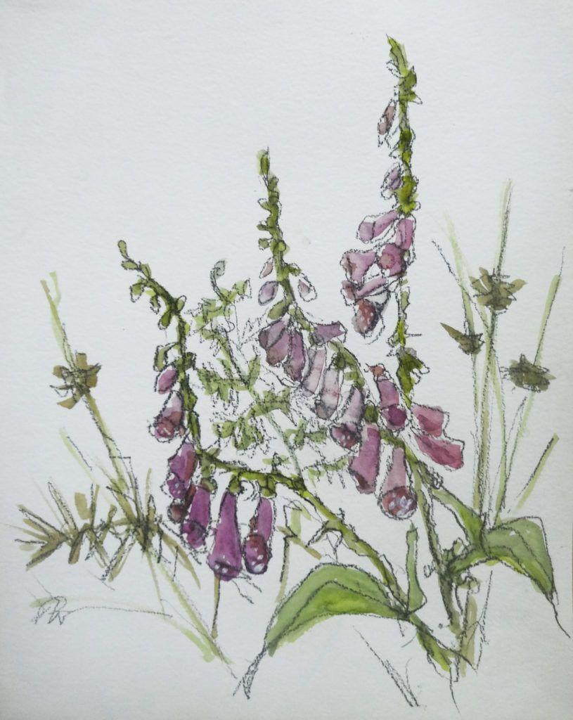 Foxgloves, rushes, bracken and thorns. Foxgloves grow like weeds in the area.