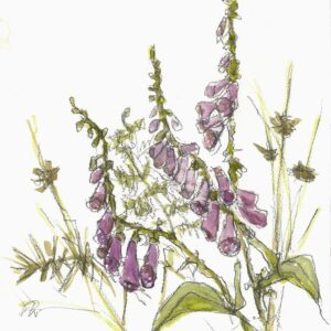 Foxgloves, bracken, rushes and thorns giclee print