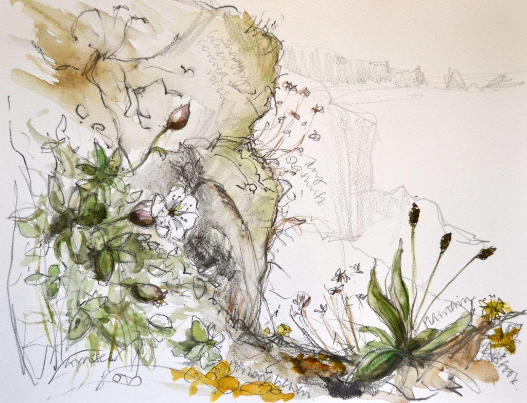 Cliff-top plant studies