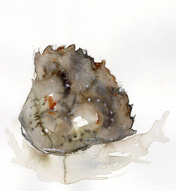 Study of a crab shell in watercolour and graphite