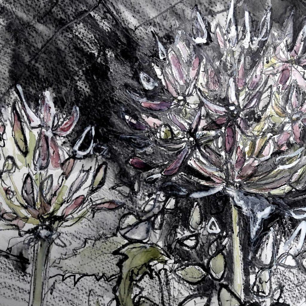 Allium study in watercolour, graphite and gouache