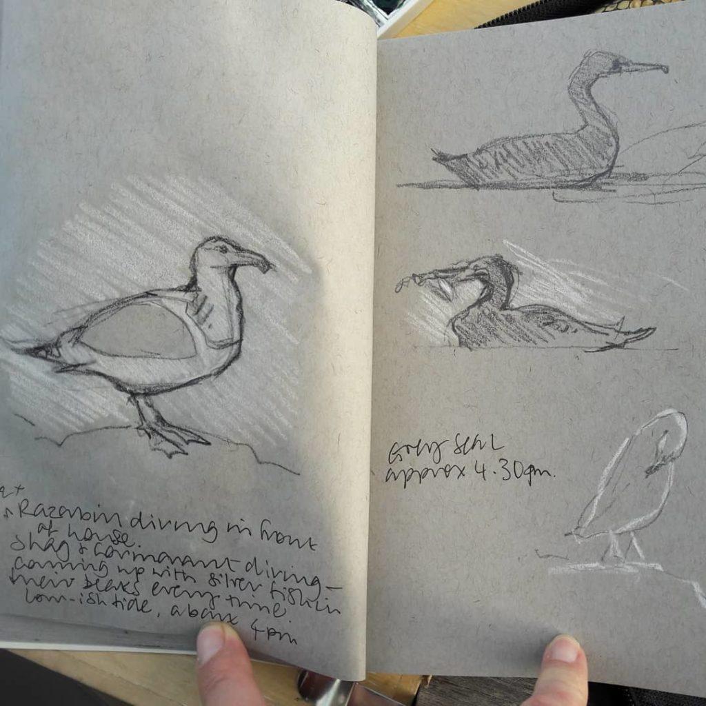 Birds at Penmon