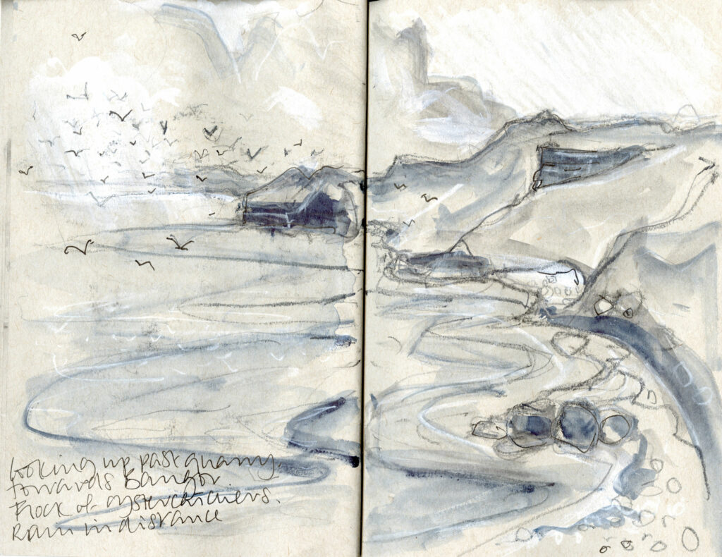 Sketch of oystercatchers at Penmon